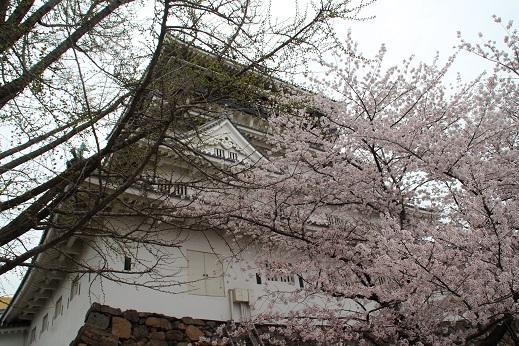 小倉城 2014-3-31-7