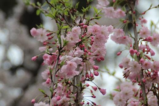小倉城 2014-3-31-9