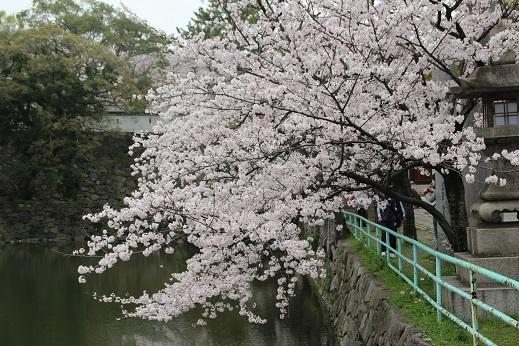 小倉城 2014-3-31-13