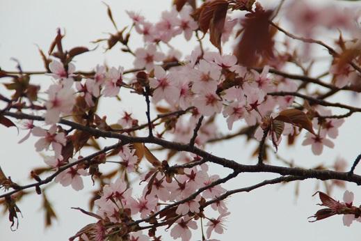 由布PA 2014-4-12-3