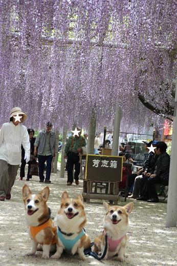 吉祥寺 2014-4-26-9
