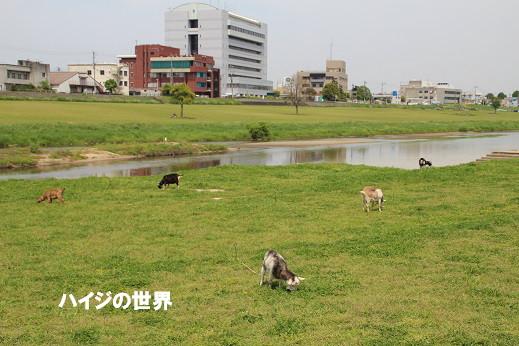 遠賀川河川敷 2014-4ー26-6