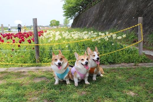 遠賀川河川敷 2014-4-26-8
