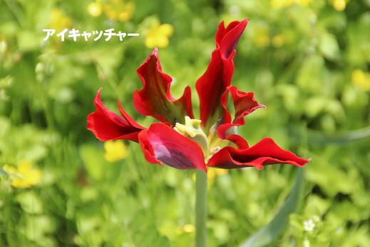 遠賀川河川敷 2014-4-26-10