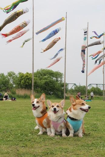 鯉のぼりとランチ 2014-4-26-3
