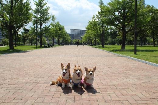 勝山公園 2014-5-1-2