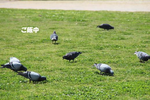 勝山公園 2014-5-1-5
