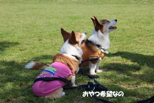 勝山公園 2014-5-1-6
