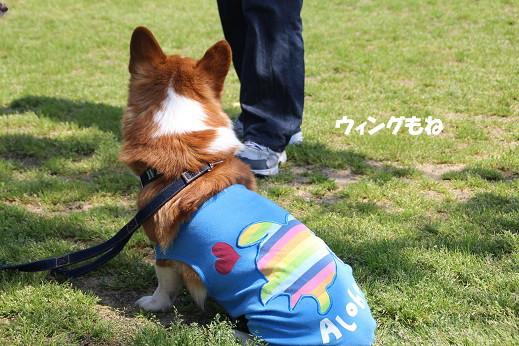 勝山公園 2014-5-1-7
