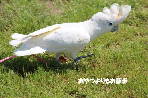 勝山公園 2014-5-1-8