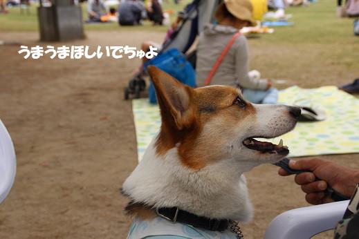 北海道フェア 2014-5-17-10