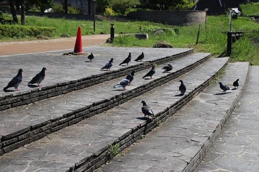 遥ちゃんと中央公園 2014-9-15-7