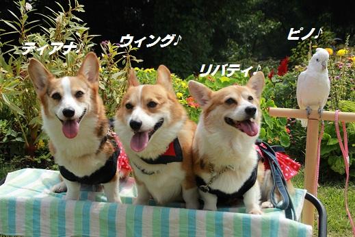 くじゅう花公園1 2014-9-28-3