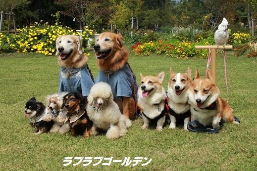 くじゅう花公園1 2014-9-28-4