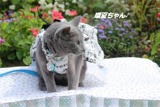 くじゅう花公園1 2014-9-28-5
