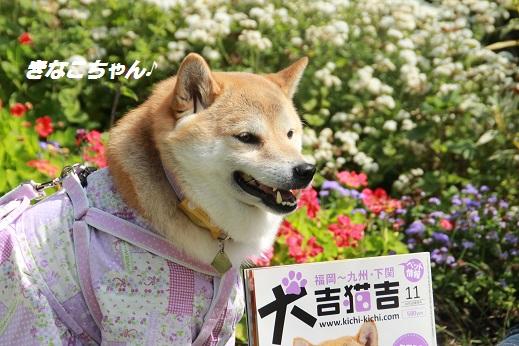 くじゅう花公園1 2014-9-28-10