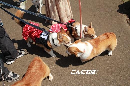 くじゅう花公園2 2014-9-28-6