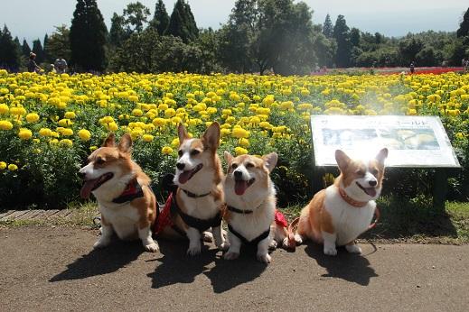 くじゅう花公園2 2014-9-28-7