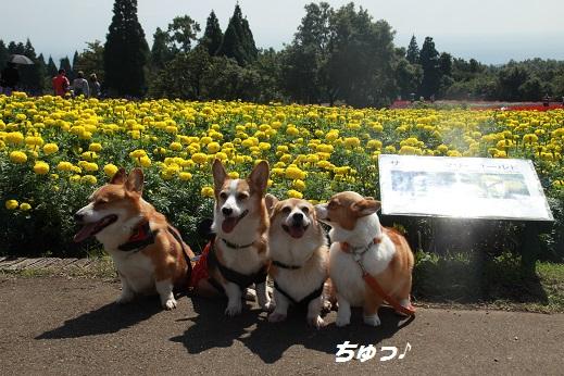 くじゅう花公園2 2014-9-28-8