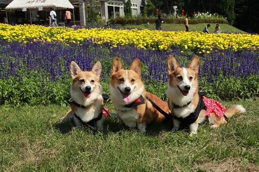 くじゅう花公園3 2014-9-28-4