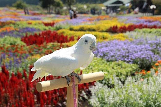 くじゅう花公園3 2014-9-28-7