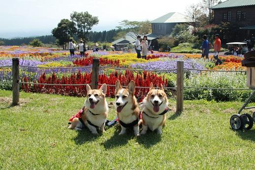 くじゅう花公園3 2014-9-28-8