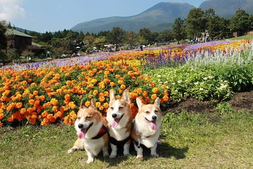 くじゅう花公園3 2014-9-28-9