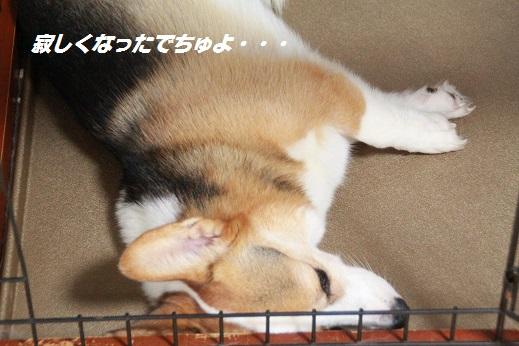 ジュイちゃん 2014-9-7-7