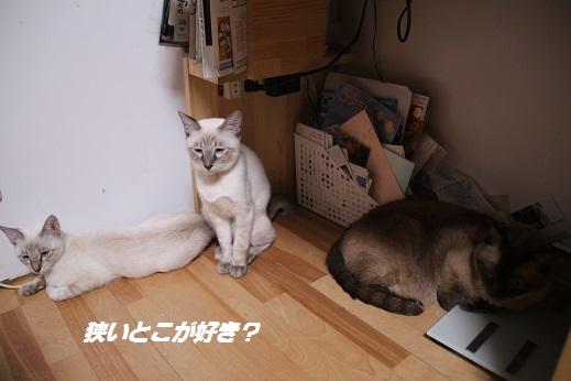 おうち1 2014-10月三連休ー1