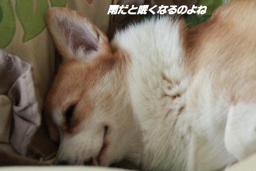 おうち1 2014-10月三連休ー5