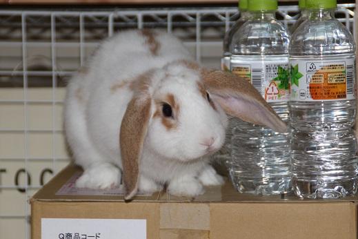 おうち2 2014-10月三連休-8