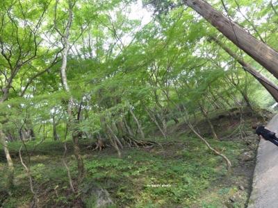 緑の香嵐渓