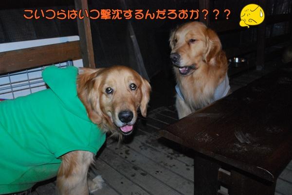 2014 04 06 (20)