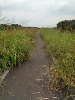 ロードバイクで松山城20141012_5