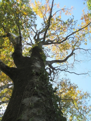 岡山県立森林公園 013-001