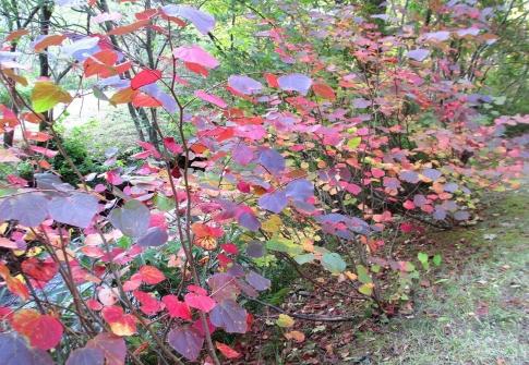 岡山県立森林公園 031-001
