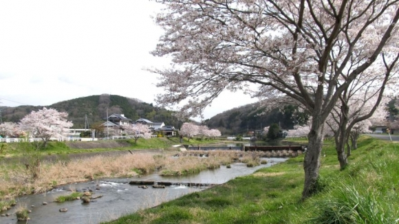 桜のある田舎風景 その1