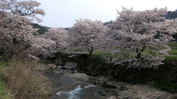 桜のある田舎風景 その2