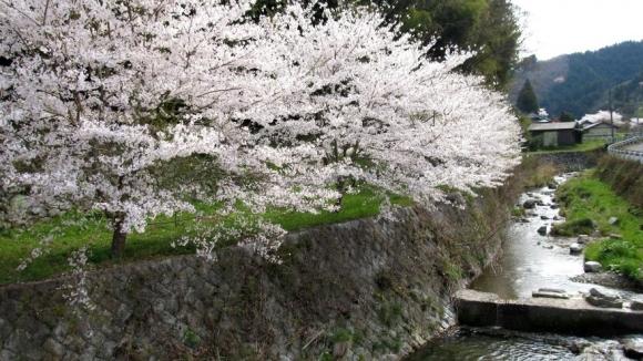 桜のある田舎風景 その4