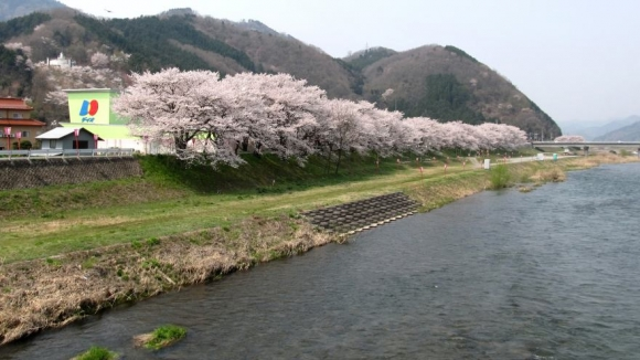 桜トンネル外側から