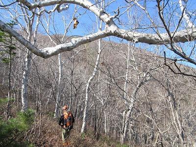 伏見岳登山道より山頂方向