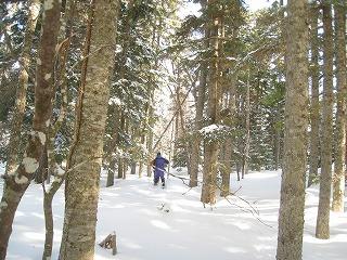 白藤の滝樹林1