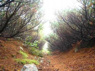 湖畔コース登山道2