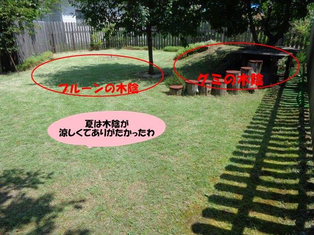 DSC01133_20140831210028431.jpg
