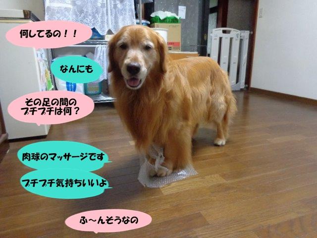 DSC01648.jpg