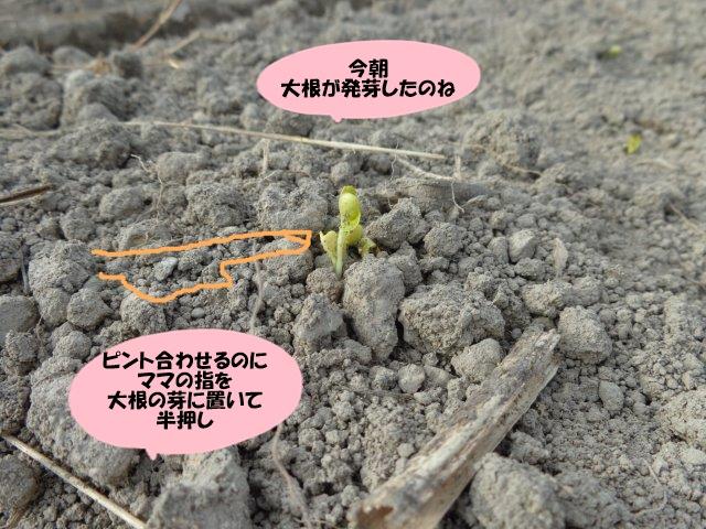 DSC01711.jpg