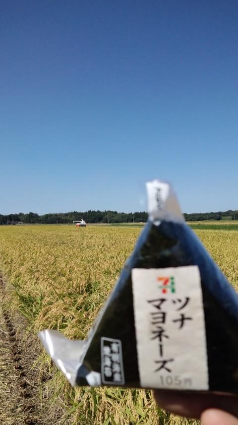 稲刈り2013
