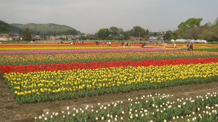 hamura140419-101.jpg