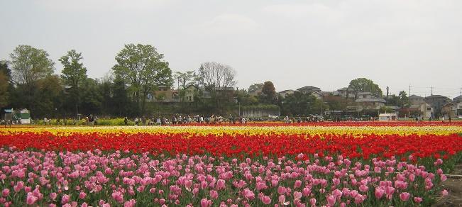 hamura140419-110.jpg