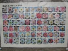 hanatomidori140301-103.jpg
